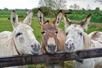 Residents of The Donkey Sanctuary in Liscarroll, Co. Cork, extend a warm welcome to visitors.
