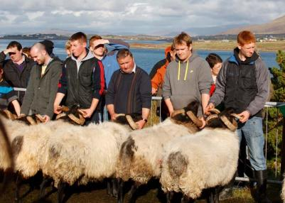 The Achill Sheep Show is held on Achill Island, Co. Mayo, every October. And, this year, the island will welcome the first Keel Sheep Show on Saturday, Oct. 1. 	Judy Enright photos